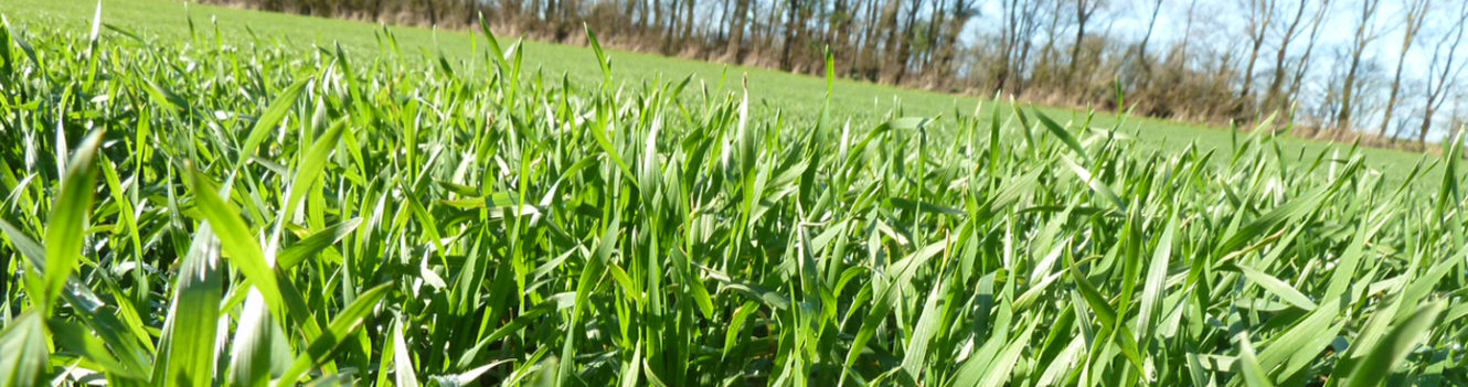 NEW THINKING BOOSTS FUNGICIDE EFFICIENCY