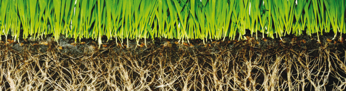 NEW FOCUS ON SOIL BIOLOGY COULD IMPROVE YIELDS IN UK ARABLE CROPS