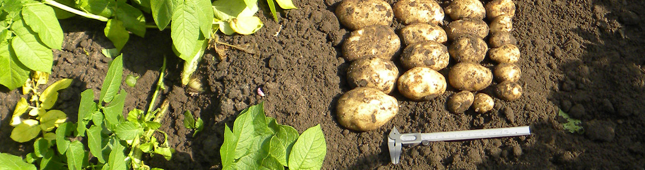 Resource use efficiency a priority for progressive potato growers