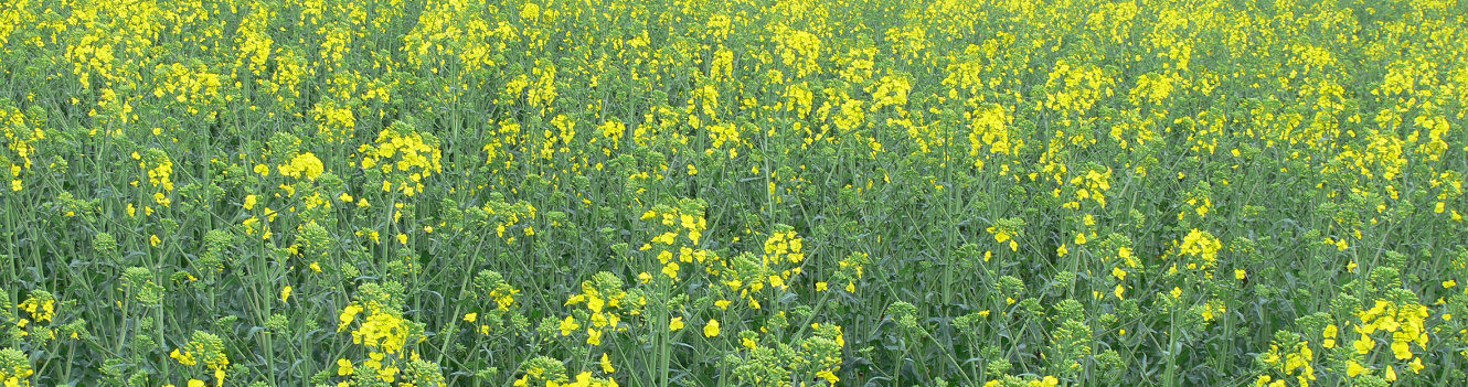 Benchmarking and 'big data' could be increasingly important for arable margins