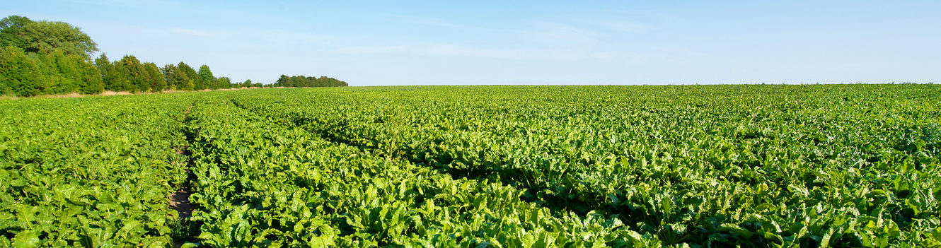 NEW BEET-SPECIFIC INOCULANT OFFERS GROWERS SIGNIFICANT YIELD BOOST