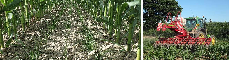 Unleashing farms' potential through enhanced rotations