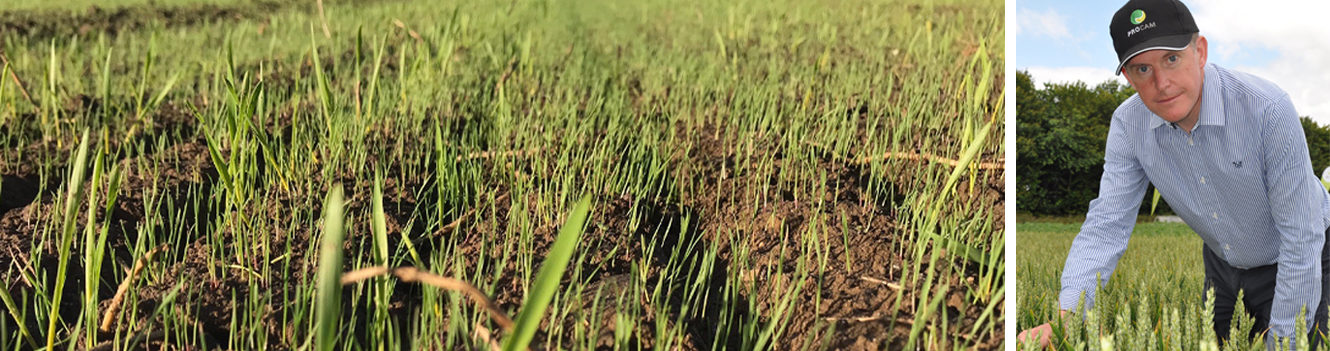 Three-step blackgrass plan helps weed out uneconomic crops
