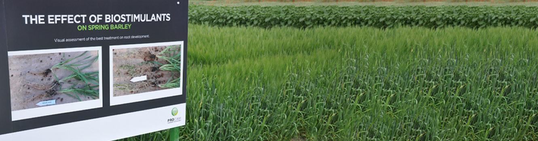 De-stress barley for better Ramularia resilience, Scottish advisor says