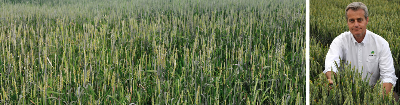Be environmentally efficient in quest for higher protein wheat, growers are urged