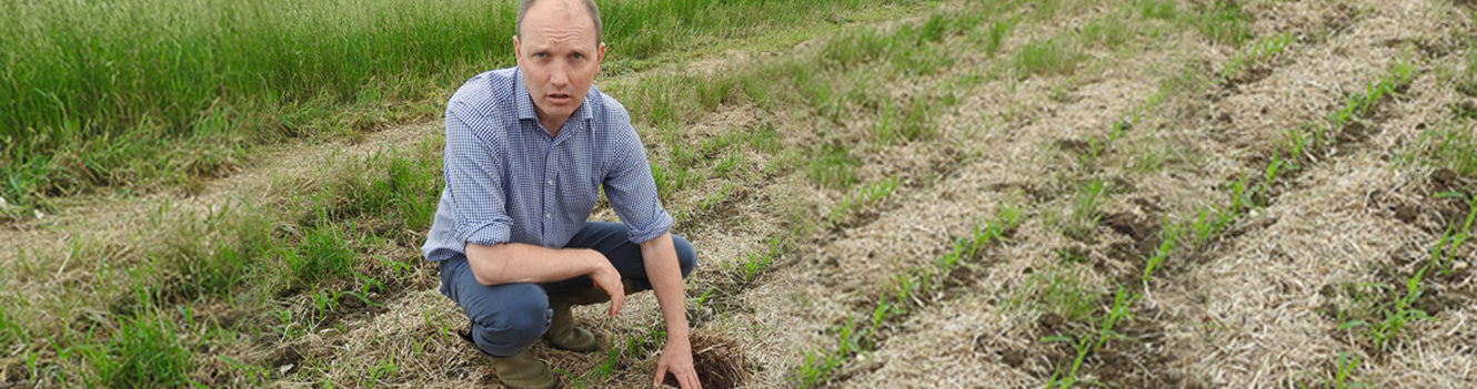 No-till potato trials show role in soil regeneration