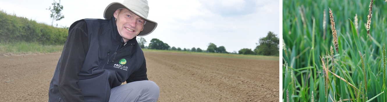 Don't neglect delaying drilling to reduce blackgrass – findings indicate yield is fine