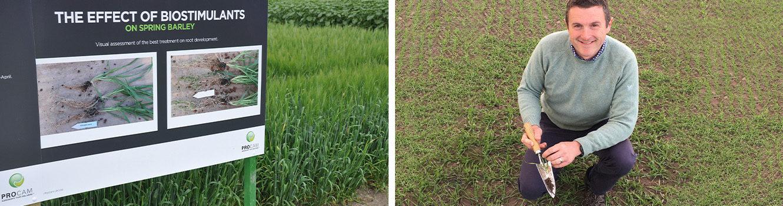Minimise barley stress to counter ramularia threat