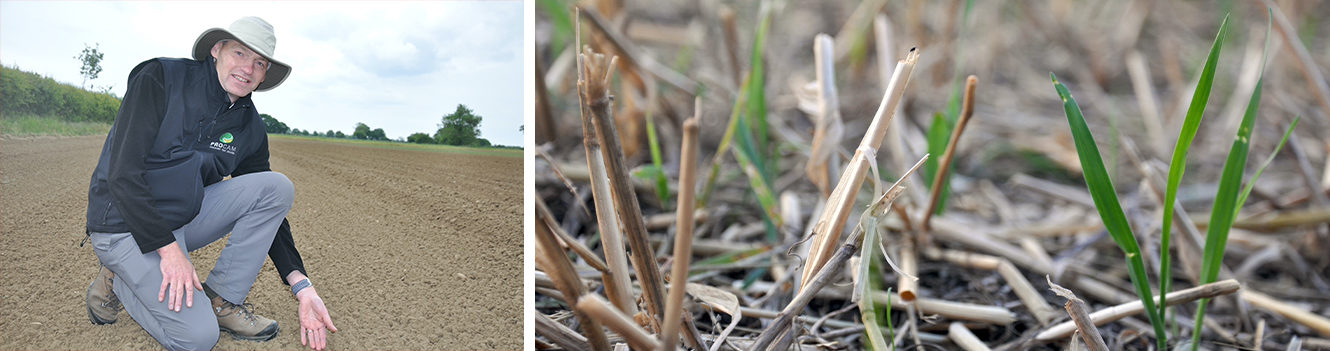 Added reasons not to rush winter cereal drilling this year